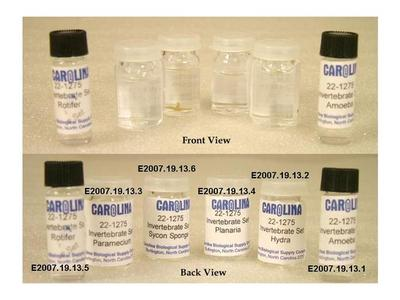 Preserved Specimen Invertebrate Set, 6 Containers, Amoeba, Hydra, Paramecium, Planaria, Rotifer, Sycon Sponge