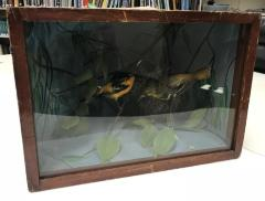 Oriole, Baltimore, School Loan Collection