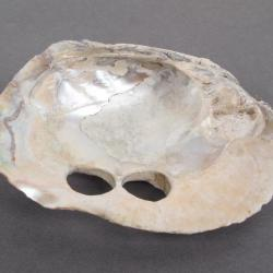 Mussel Shell, Button Hole