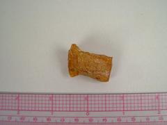Amber Fragment
