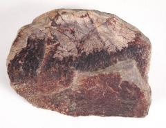 Dinosaur bone chunk