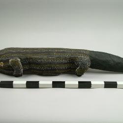 Ceremonial Blue-tongue Lizard