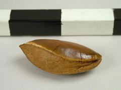 Nut, Brazil