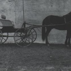 Photograph horse and buggy