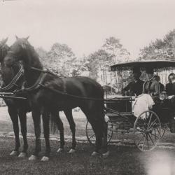 Photograph, horse drawn buggy