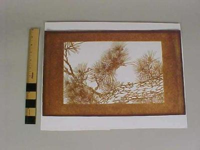Cut - Out, Depicting Natural Coniferous Tree Branches