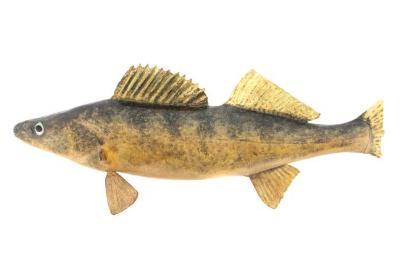 Walleye (Cast)