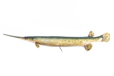Longnosed Gar (Cast)