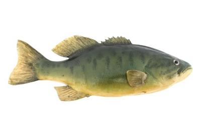 Smallmouth Bass (Cast)