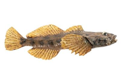 Mottled Sculpin (Cast)