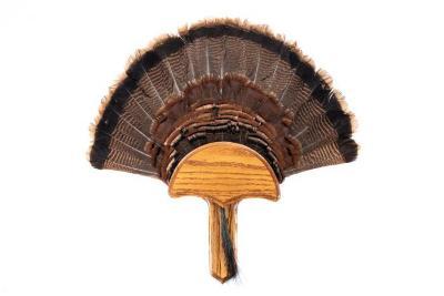 Wild Turkey (Tail)