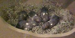 Baby Rabbits (5)