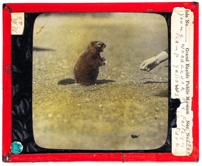 Michigan Mammals Slideshow