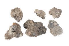 Invertebrate Fossils
