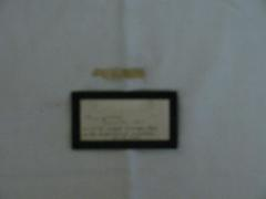 Coat Fragment