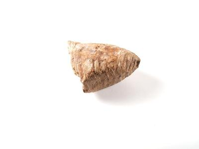 Mammoth Tooth, Partial