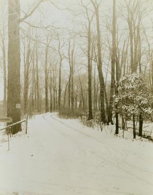 Photograph, No Admittance Driveway