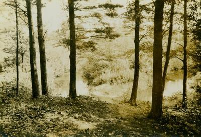 Photograph, Trees And Stream