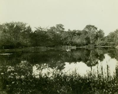 Photograph, Pond