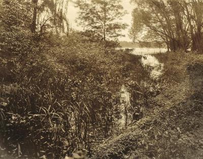 Photograph, Marsh