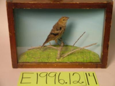 Cowbird, School Loan Collection