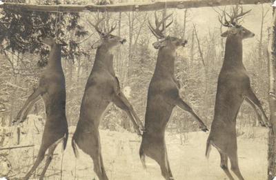 Photograph, Hanging Deer