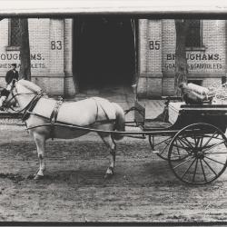 Photograph, Horse and Coach, Broughams Coaches & Gabriolets