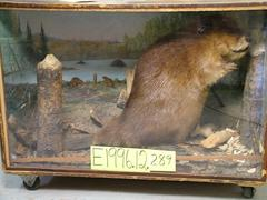 Beaver, School Loan Collection