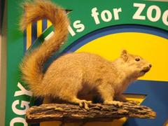 Michigan Fox Squirrel, School Loan Collection