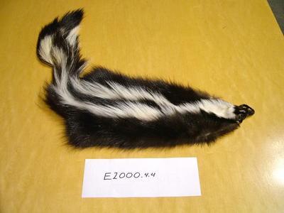 Skunk, Striped, Mephitis Mephitis Pelt