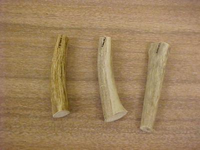 Mule Deer Antler Tines, 3, Odocoileus Hemionus