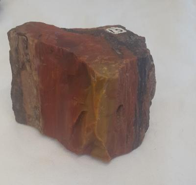 Silicified Wood