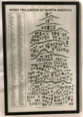 Framed Poster, Index Trilobites of North America