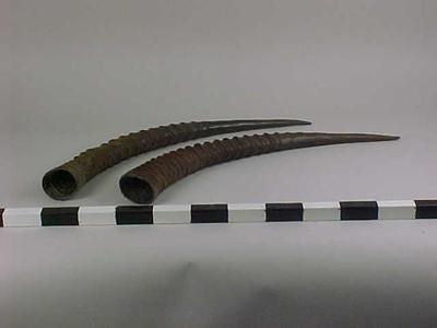 Horns, Roan Antelope (1 Pair)