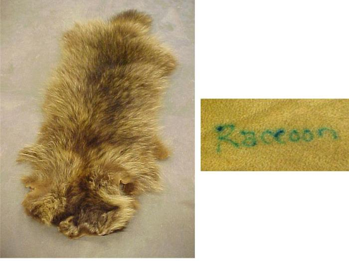 Raccoon Pelt