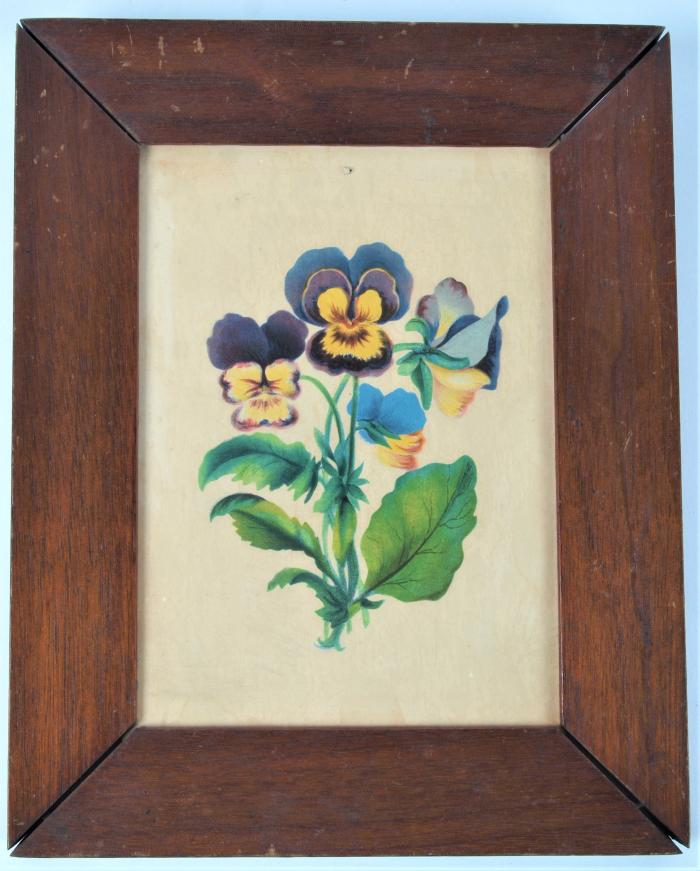 Chromolithograph of Pansies